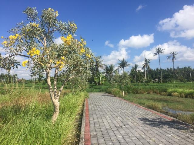 Djl Tanah Kavling Pering - Gianyar - Bali, Pering, Gianyar