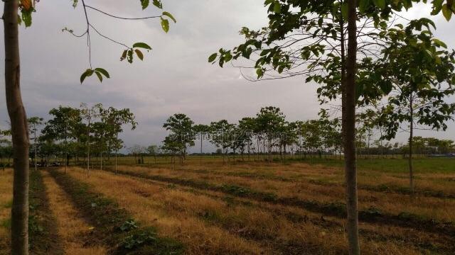 tanah murah di cepat, tanah tinggi, tangerang