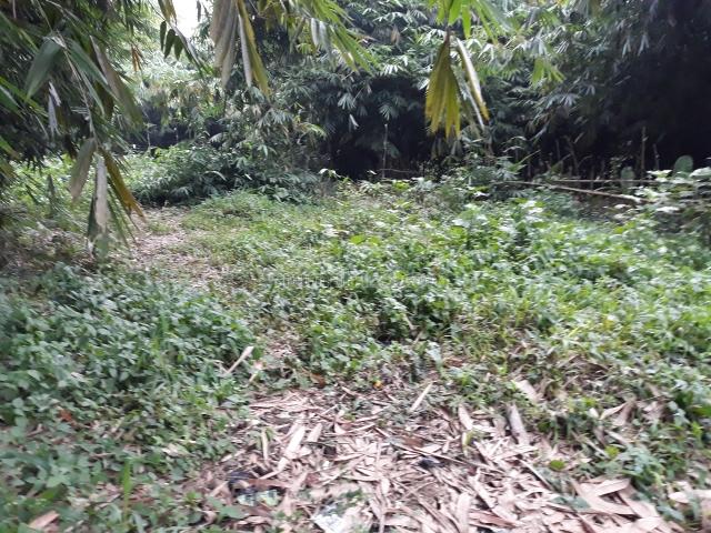Lahan pinggir jalan murah,ciampea bogor, Ciampea, Bogor