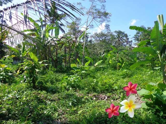 JTU 421 - Tanah View tebing Dan Sungai Di Payangan-Bali Seluas 50 Are Cocok Untuk Villa, Payangan, Gianyar