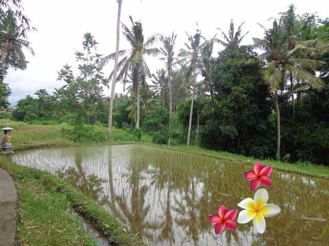 JTU 460 - Dekat Wisata Monkey Forest, Tanah Di Ubud-Bali Cocok Untuk Villa Seluas 30 Are, Ubud, Gianyar
