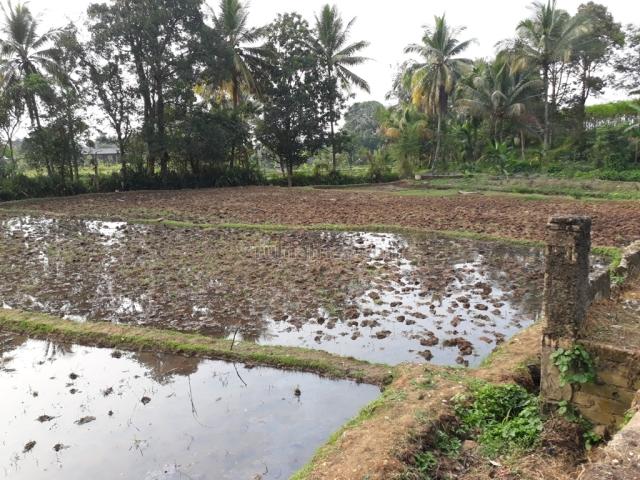 Lahan produktif ada sumber air dan saung ciampea, bogor, Ciampea, Bogor