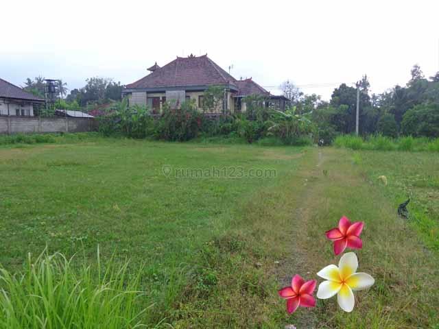 JTU 442 - Tanah Di Ubud-Bali View Sawah Dan Kebun, Cocok Villa Seluas 10 Are, Ubud, Gianyar