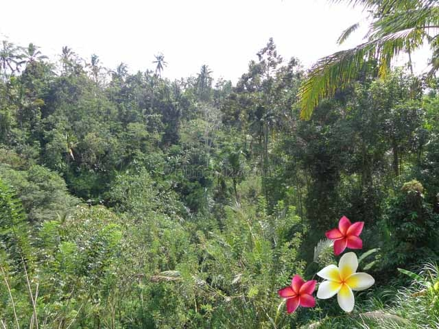 JTU 416 - Tanah View Sungai, Tebing Dan Sawah Di Payangan-Bali Seluas 15 Are, Payangan, Gianyar