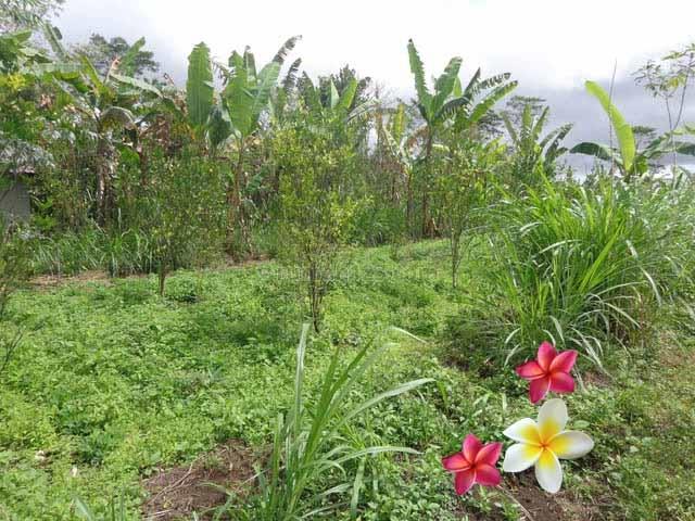 JTU 678 - Cocok Untuk Villa Di Tanah Seluas 14 Are Di Tegallalang-Bali, Tegallalang, Gianyar