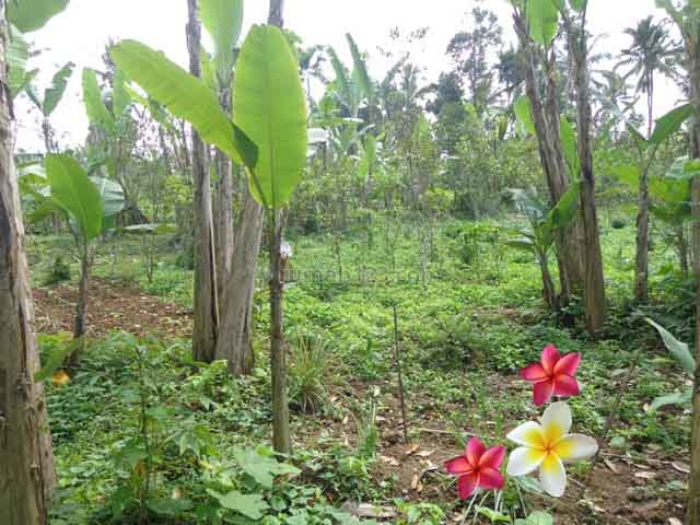 JTU 682 - Cocok Untuk Villa Dan Perkebunan Di Tanah Seluas 300 Are Di Payangan-Bali, Payangan, Gianyar