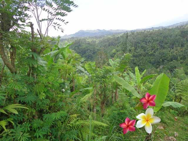 JTU 688 - Berada Di Lingk Desa, Tanah Seluas 300 Are Di Payangan-Bali Cocok Untuk resort, Payangan, Gianyar