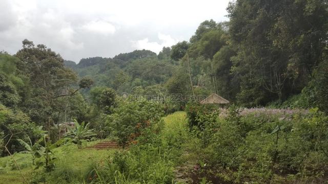 Tanah SUBUR di PEGUNUNGAN yg INDAH, ada MATA AIR dan SUNGAI, Ciawi, Bogor