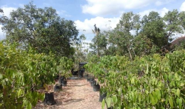 BU ) : Tanah Plus Kebun Buah Unggul 2.445m2 Murah Wonogiri, Eromoko, Wonogiri