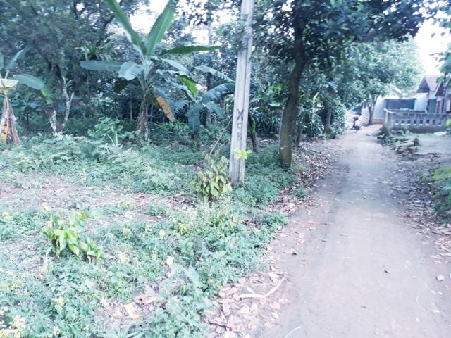 Lahan hunian berupa kebun dekat pasar ciampea bogor, Ciampea, Bogor