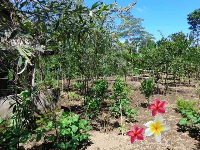 JTU 402 - Tanah Luas 8 Are Di Tegallalang-Bali Dekat Wisata Elephant Safari, Tegallalang, Gianyar