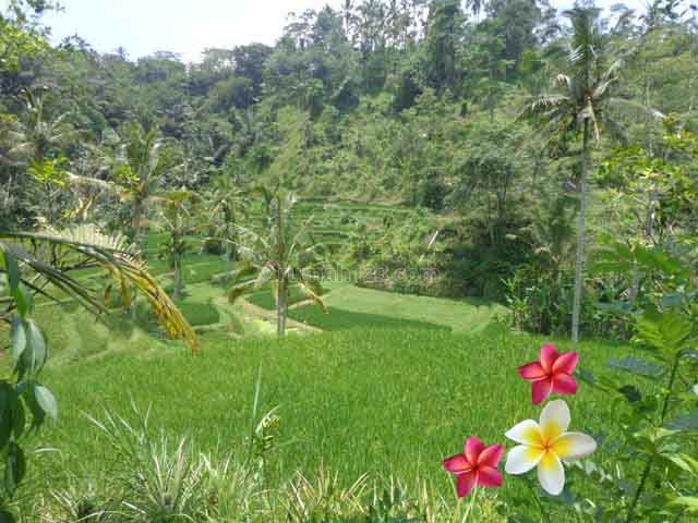 JTU 723 - Tanah Cocok Untuk Villa Seluas 40 Are Dengan View Sawah Di Tegallalang-Bali, Tegallalang, Gianyar