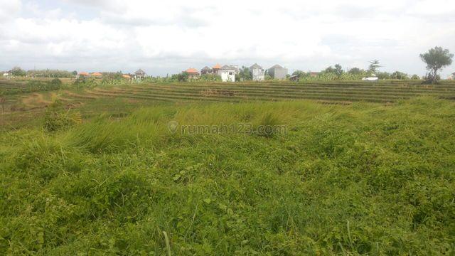 Land For Freehold in Canggu Kayu Tulang, Canggu, Badung