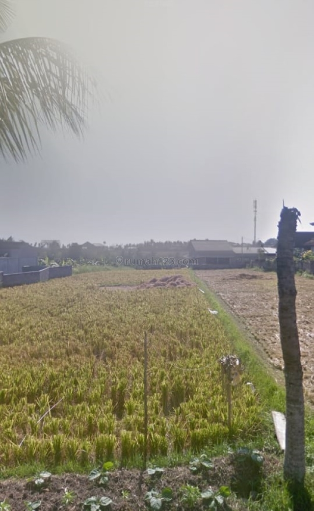 Freehold Land in Cemagi With Rice Fields View Surrounding, Cemagi, Badung