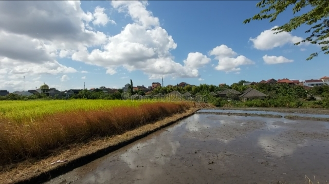 Freehold Land Rice Fields View Batu Bolong Beach Only 6 Minutes Away to the Beach, Canggu, Badung