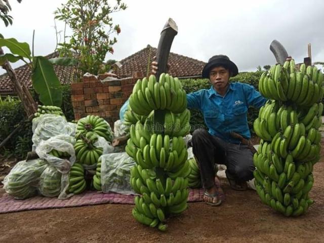 kavling produktif kebun pisang cavendish shm harga murah zona pemukiman, Pademangan, Jakarta Utara