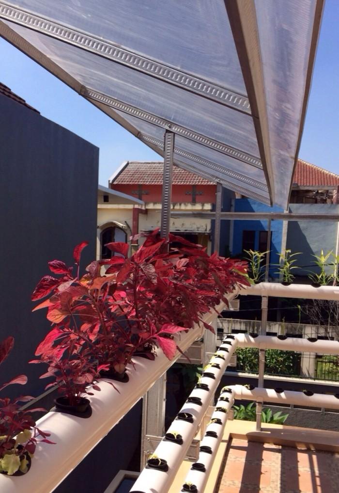 Gini Cara Berkebun Hidroponik Di Rumah Rumah123 Com