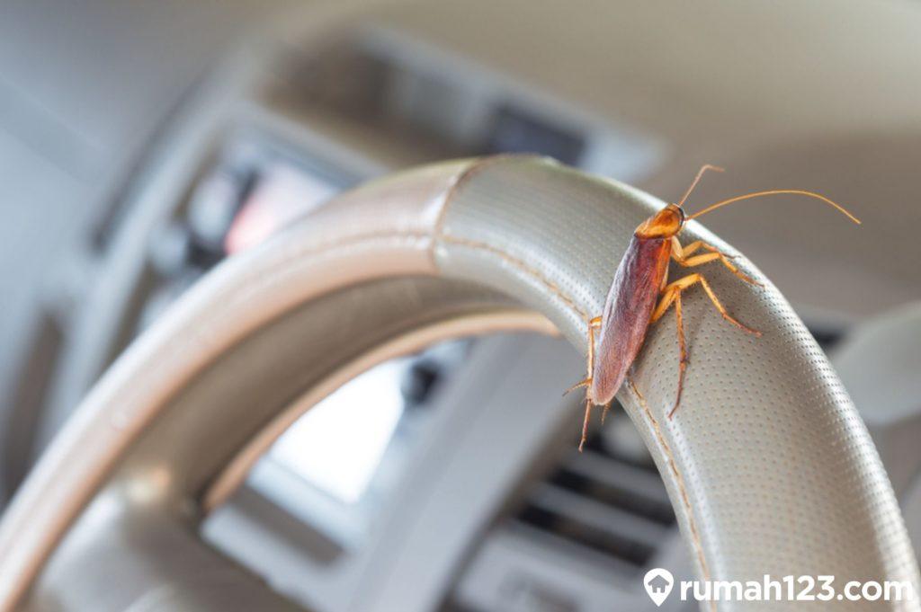 cara menghilangkan kecoa di mobil