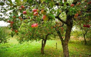10 Tips Menanam Pohon di Rumah   Sejumlah Hal Perlu Kamu Perhatikan