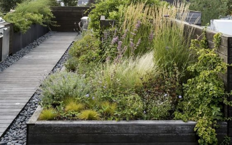 tanaman yang cocok ditanam di atap rumah