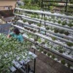 Gaya Asyik Berkebun di Rumah ala Kota Besar