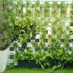 10 Tanaman yang Cocok untuk Kebun Vertikal, Sudah Tahu?