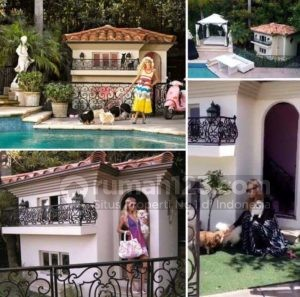 Anjing Paris Hilton Tinggal di Rumah Dua Lantai, Beneran Lho!