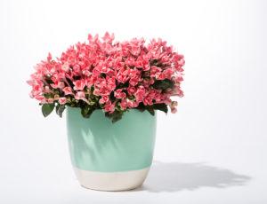 7 Pilihan Terbaik Bunga Hiasan Rumah