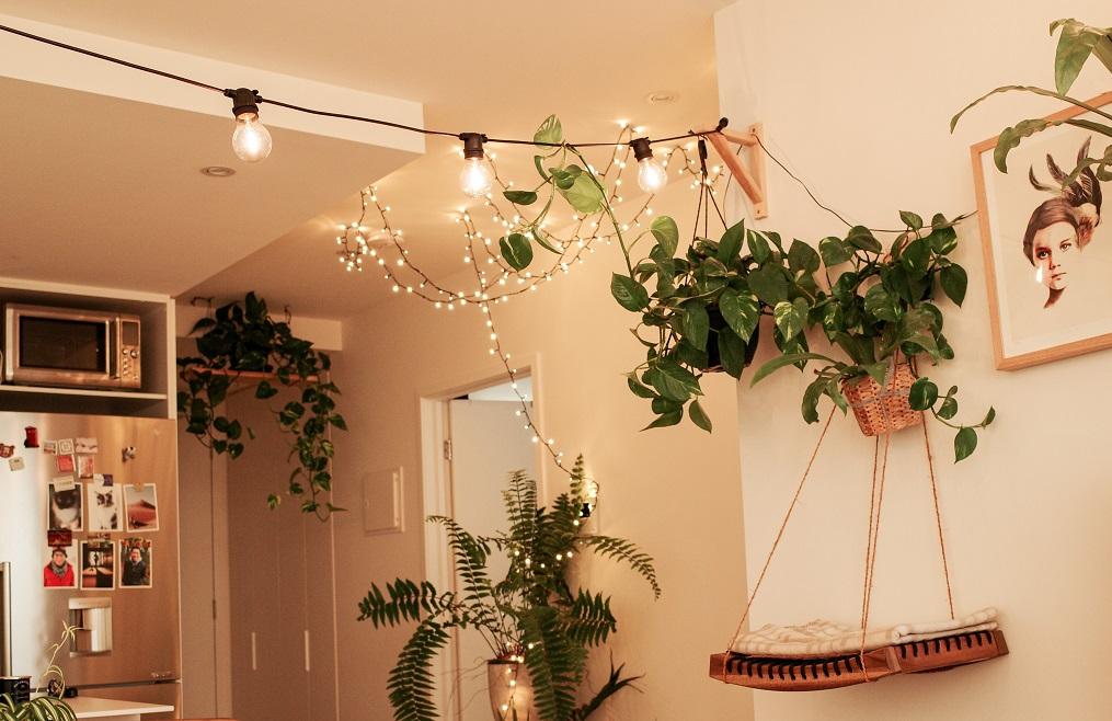 tanaman ruangan