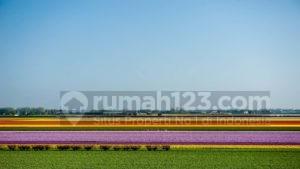 Aiihh...! Cantiknya Festival Bunga di Keukenhof Belanda