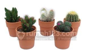 Pelihara Kaktus dalam Ruangan Gampang Kok
