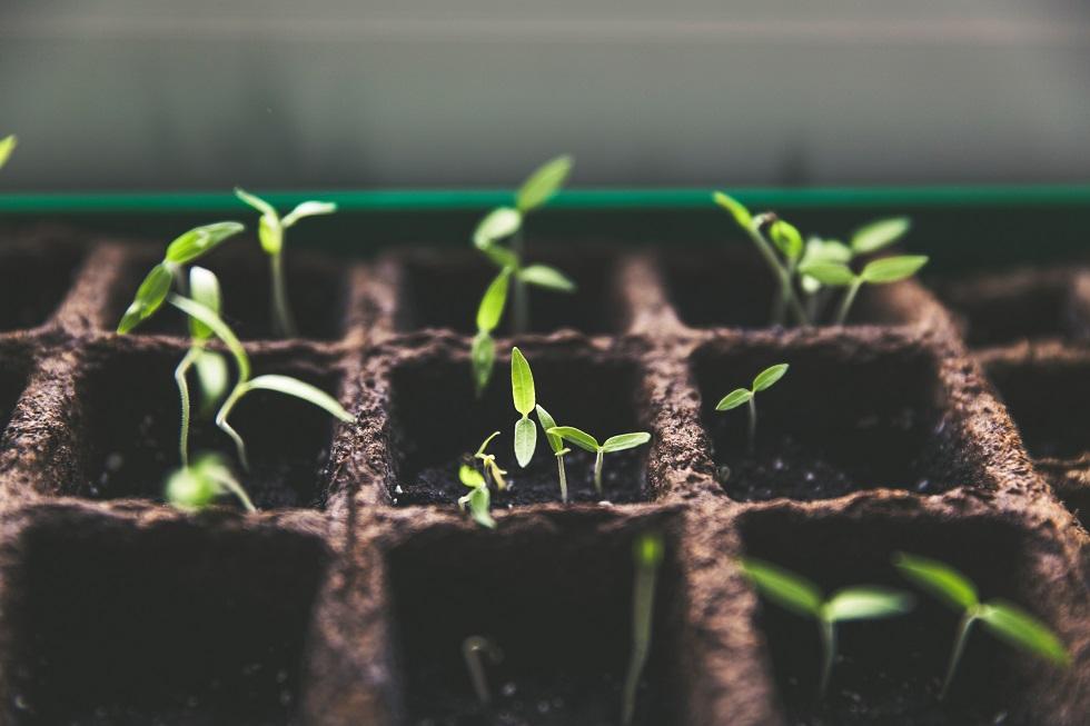 cara menyuburkan tanaman