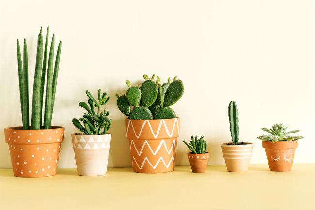 Kumpulan Kaktus