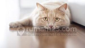 Tips Beli Rumah: 4 Hal yang Harus Kamu Perhatikan Kalau Pelihara Hewan