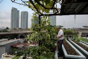 Urban Farming, Berkebun Kekinian Ala Masyarakat Modern
