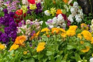 Ga Punya Lahan Tapi Pengen Buat Taman, Ada 18 Cara Kreatif Jadi Solusinya