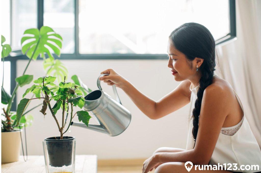 cara menyiram tanaman