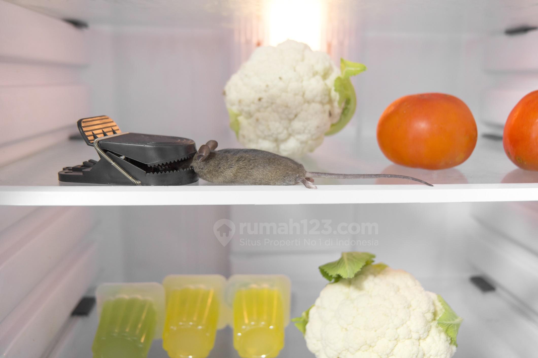 Cara Mengusir Tikus dengan Ampuh Menggunakan 9 Bahan Dapur