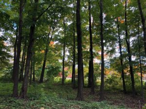 Mengenal Obyek, Subyek, dan Sahnya Jual Beli Tanah