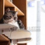 Lemari Buku Sekaligus Tempat Bermain Binatang Peliharaan