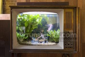 10 Desain Akuarium Unik untuk Kamu Pecinta Ikan Hias. Anti Monoton!