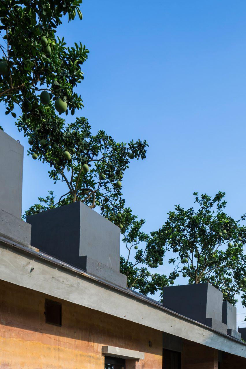 Pohon buah- Rumah123.com