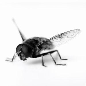 7 Cara Mengusir Lalat yang Sangat Mudah dan Terbukti Ampuh!