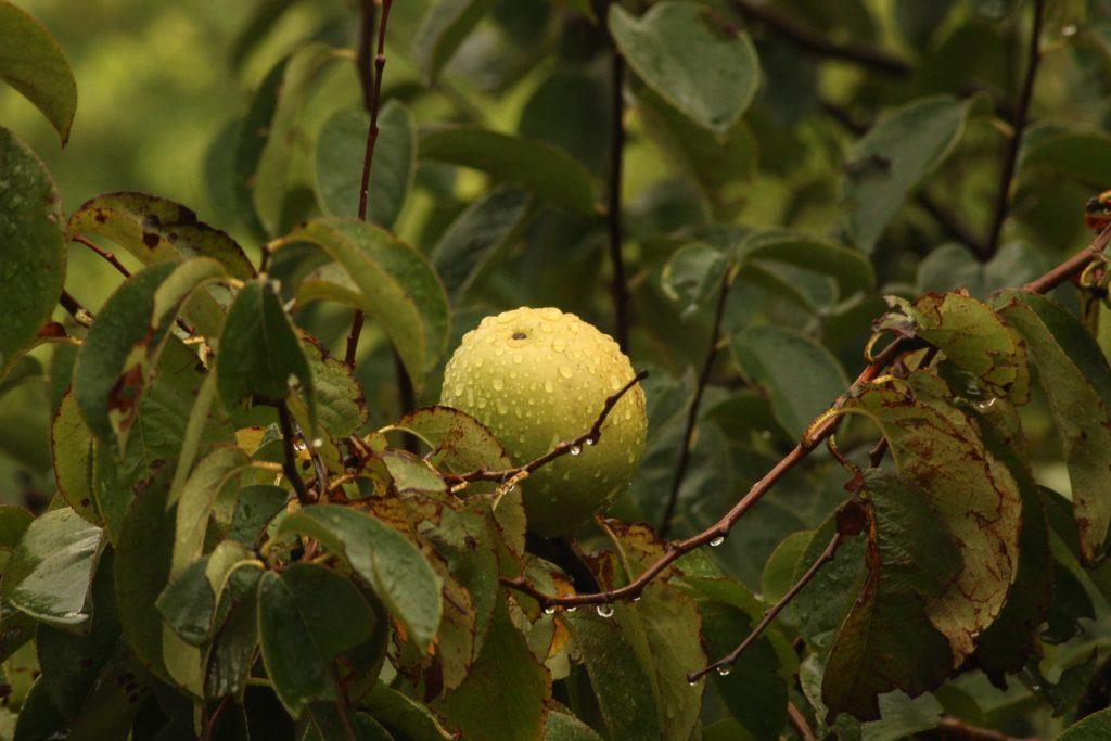 tanaman buah dalam pot - rumah123.com