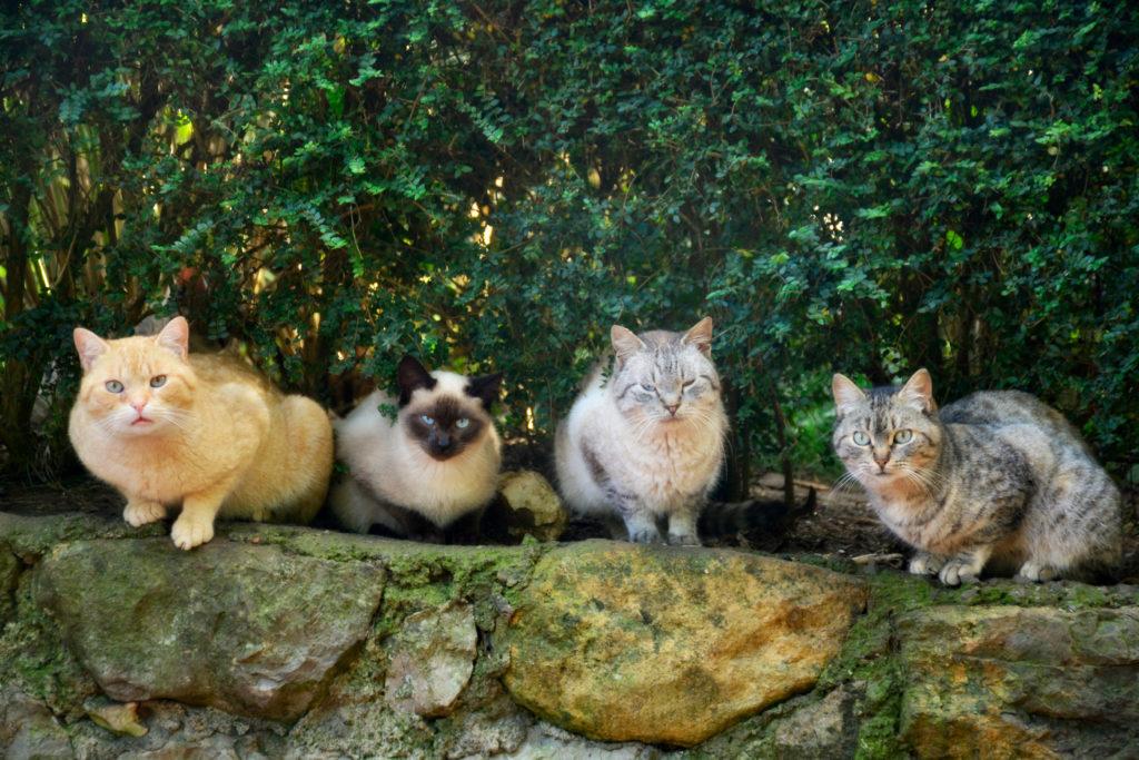 cara mengusir kucing - rumah123.com