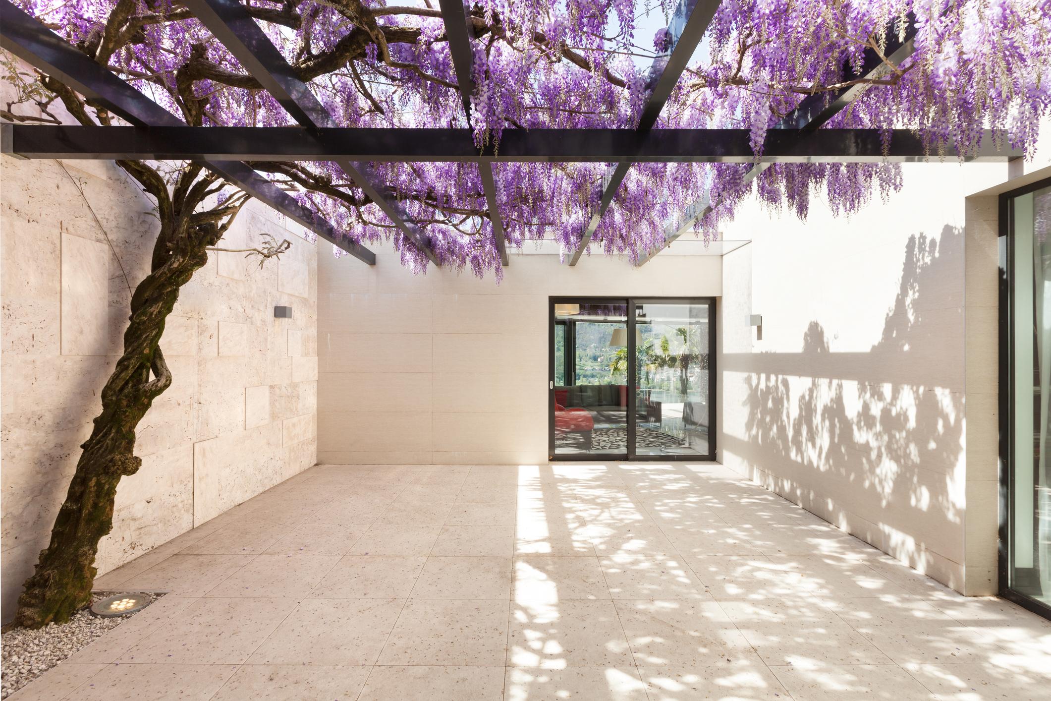 6 Jenis Tanaman Bunga Gantung Tahan Panas Yang Bantu Percantik Rumah Rumah123 Com