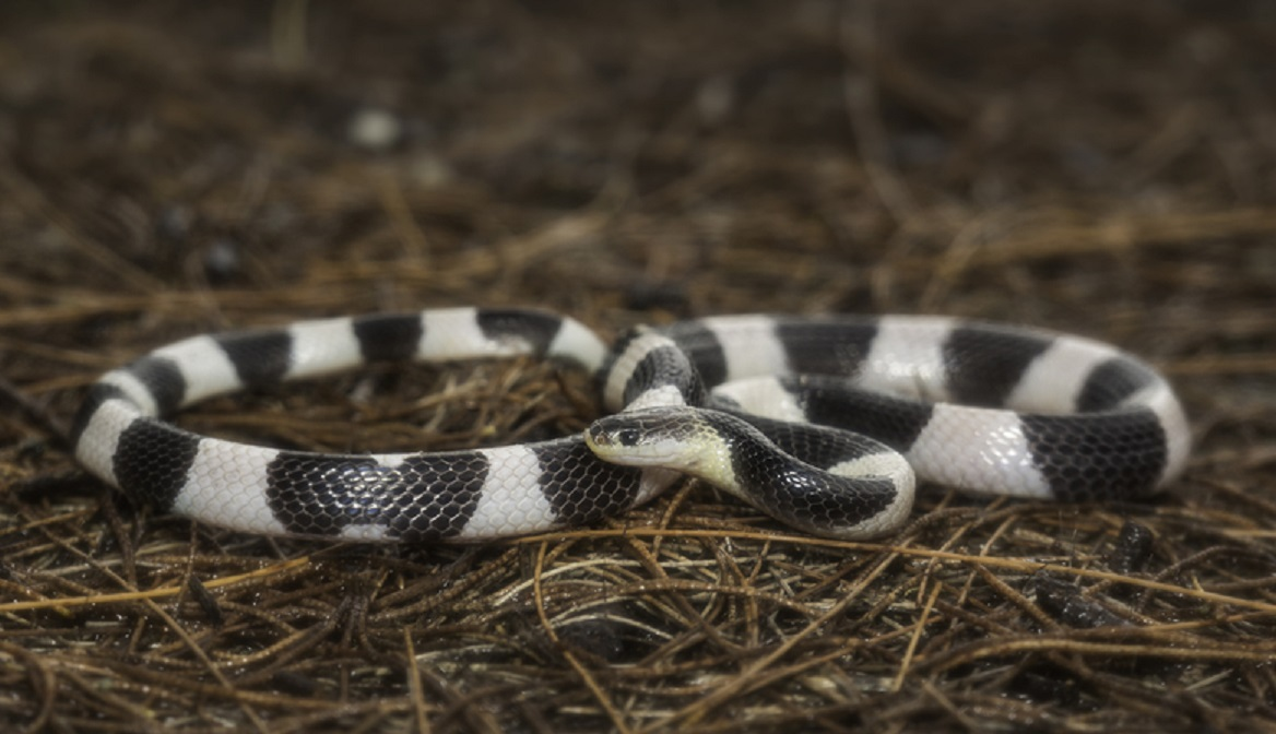 cara mencegah ular masuk rumah- rumah123.com
