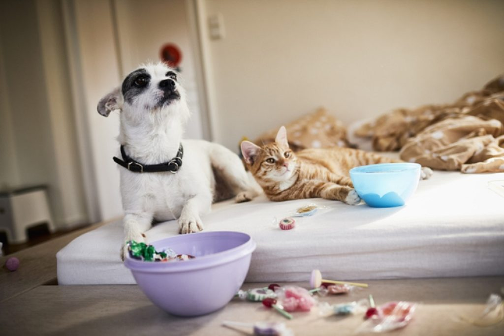 cara memelihara hewan di apartemen- rumah123.com