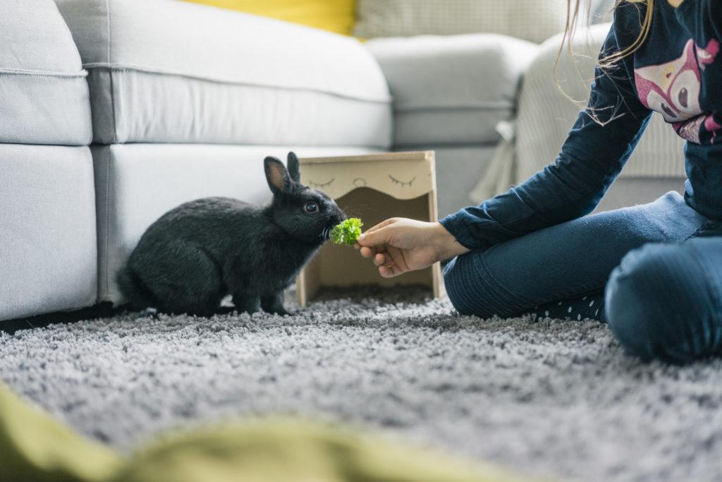 Cara merawat kelinci ternyata mudah dan murah - Rumah123.com