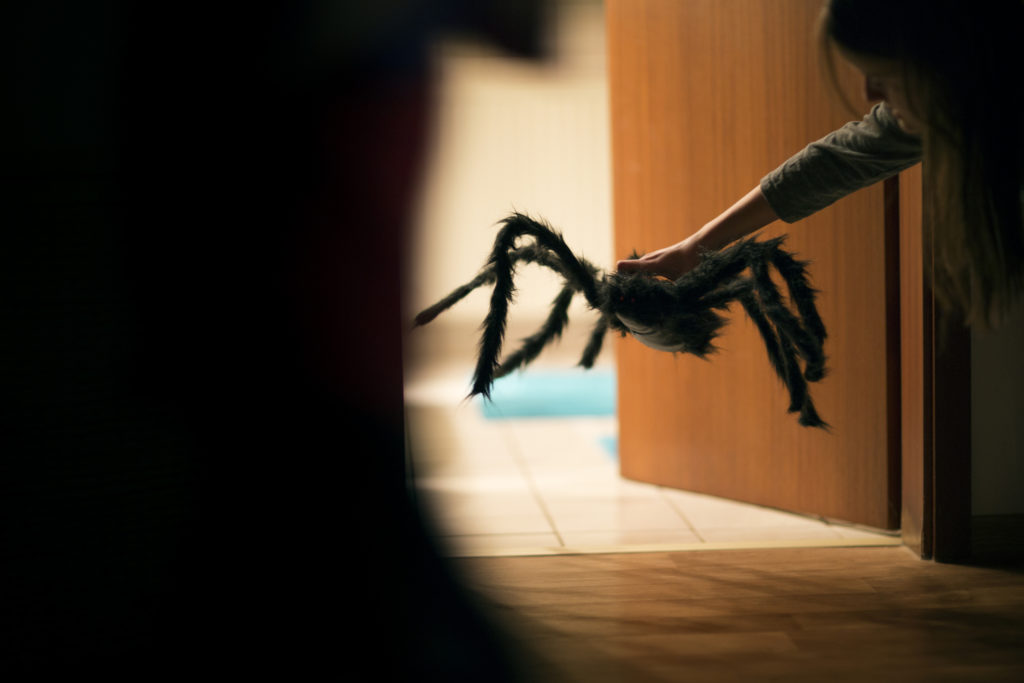 Ini dia cara mengusir laba-laba tanpa harus membunuh atau menyakitinya - Rumah123.com
